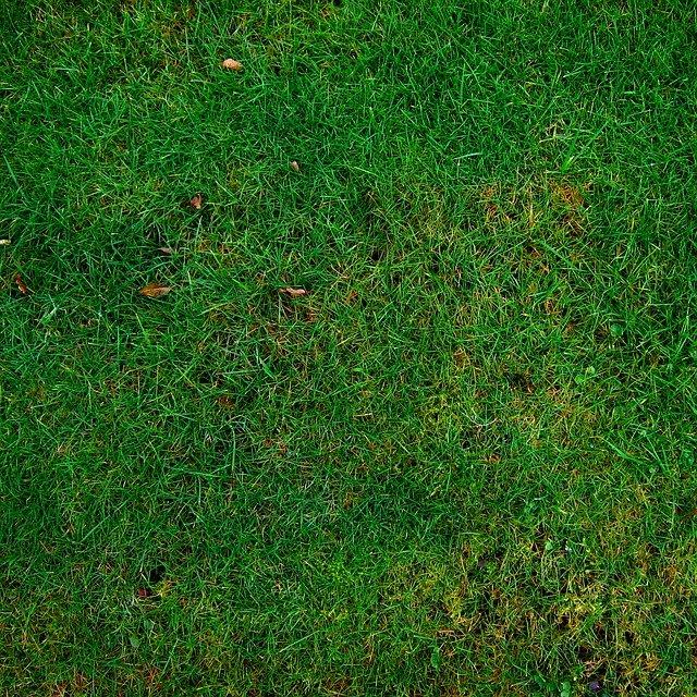 trawnik spalony słońcem
